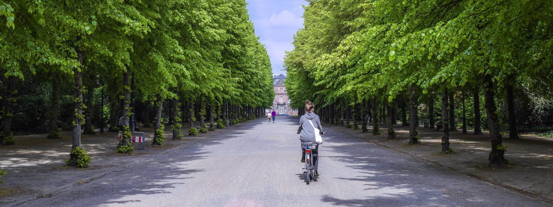 Fahrradfahrerin fährt entlang einer Allee in Düsseldorf